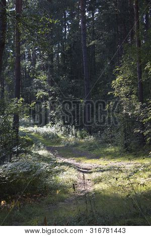 The road in the beautiful green summer forest. Sun shine through the leaves. Beautiful green mystique forest. Walk through the forest. Tourism in the North of the country. Forest reserve. Pine forest. Path in the forest