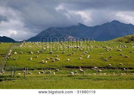 Sheep On Green Farmland