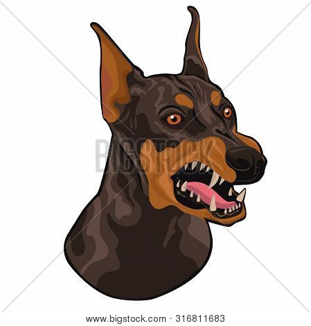 Head Of A Barking Doberman Isolated On A White Background. Vector Image.