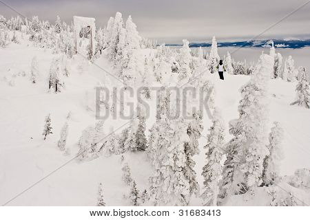 Snow Covered Forest on Ski Resort