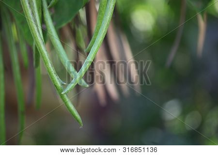 Catalpa Tree Plant Tropic Bokeh Day Light