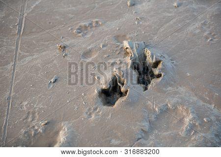 Animal Small Footprints On The Floor