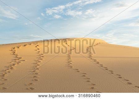Human Footprints On Desert Sand Going Towards Horizon On Hot Sunny Day.