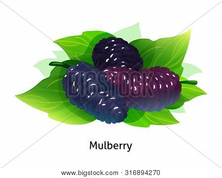 Mulberry Berries With Leaf On White Background