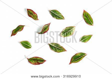 Various Green Leaf Isolated On White Background