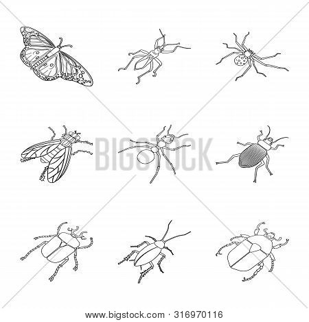 Isolated Object Of Fauna And Entomology Sign. Collection Of Fauna And Animal Stock Symbol For Web.