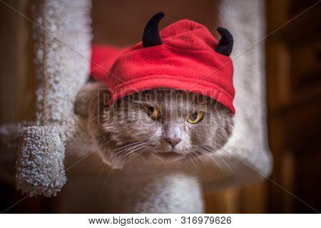 Cat In A Devil Costume, Red Hoods, Black Horns, Dissatisfied Gaze Of Yellow Eyes, Halloween