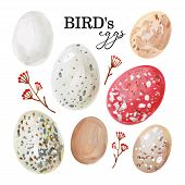 Hand-drawn spotted avian eggs and branches with berries poster