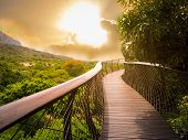Tree Canopy Walkway (wooden bridge) in Kirstenbosch National Botanical Garden is acclaimed as one of the great botanic gardens of the world with gold light sky background, Cape Town, South Africa. poster