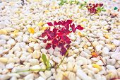 Pebbles gravel with white, yellow, blue small natural stone rubble with sparse green and red grass plants on the ground texture in perspective. Young grass sprouted among natural crushed stones poster