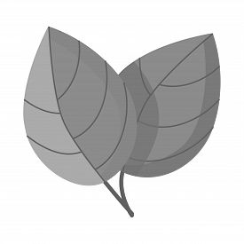 Isolated Object Of Leaf And Ginger Sign. Set Of Leaf And Plant Stock Symbol For Web.