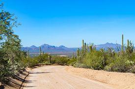 Scenic Drive In Saguaro National Park Tucson Arizona