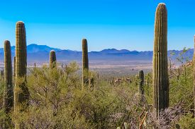 Desert Overlook Of Arizona Mountains In Saguaro National Park