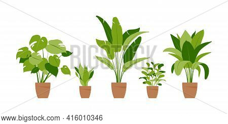 Collection Home Plants. Potted Plants Isolated On White. Vector Set Green Tropical Plants. Trendy Ho