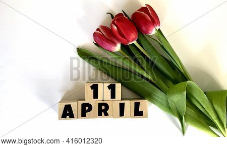 April 11.april 11 On Wooden Cubes.next To It Is A Bouquet Of Red Tulips On A White Background.calend