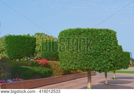 Walkway With Shaped Ornamental Topiary Trees With Lush Blossom Shrubs And Flower Beds On Background