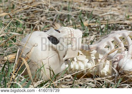 Skeleton Skull And Chest Lying In Dry Grass With Some Green Shoots Of Grass