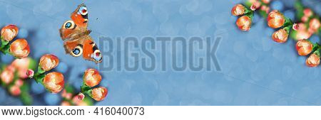 Wide-screen Unfocused Background, With Orange Japanese Quince Buds And A Colorful Butterfly. Art Des