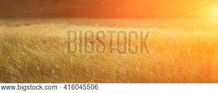 Field at sunset, sunset on meadow. Grass in the sunlight background. Summer, autumn, fall season landscape. Summertime, autumntine sun scene. Backlit.