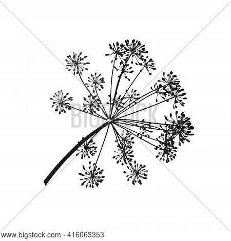 One Gray Vector Branch Of Dill Seeds Is On A White Background