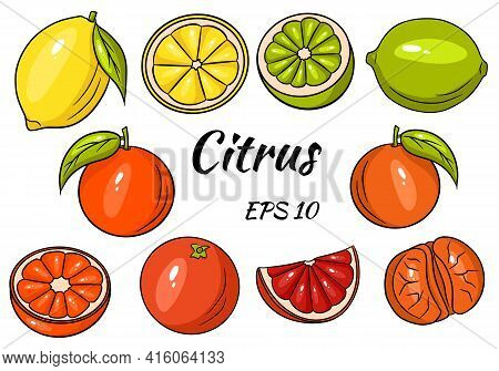 Collection Of Bright Citrus Fruits. Lemon, Lime, Grapefruit, Orange, Mandarin. Whole Fruit And Cut I