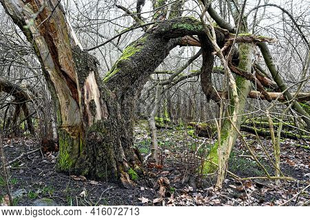 Dead Trees And Living Grass And Moss