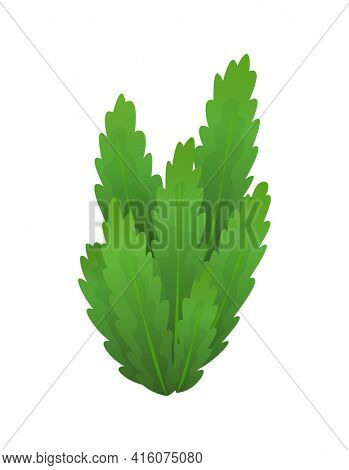 Grass or bushes. Green spring grass. Fresh plants, garden botanical greens, herbs and leaves  isolated on white. Natural lawn meadow bushes, floral vegetation. Element to create a scene