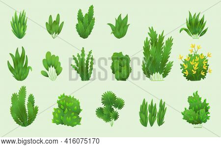 Grass or bushes. Green realistic spring grasss. Fresh plants, garden botanical greens, herbs and leaves  isolated on white. Different patterns of natural lawn meadow bushes