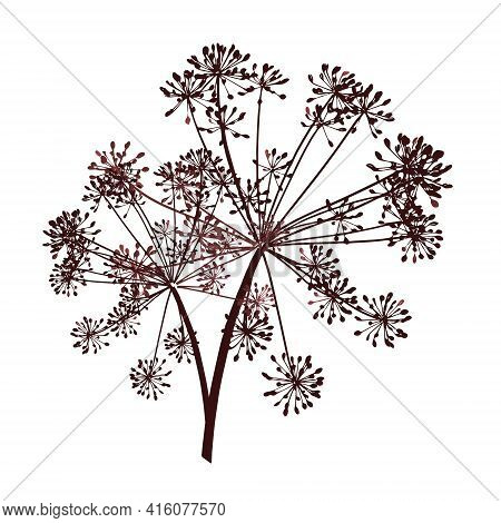One Brown Vector Branch Of Dill Seeds Is On A White Background
