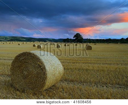 Haybales in Northumberland