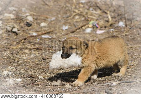 Playful Puppy, Carries In His Teeth. The Dog Is Playing In The Street. Take Dog From Shelter And Giv