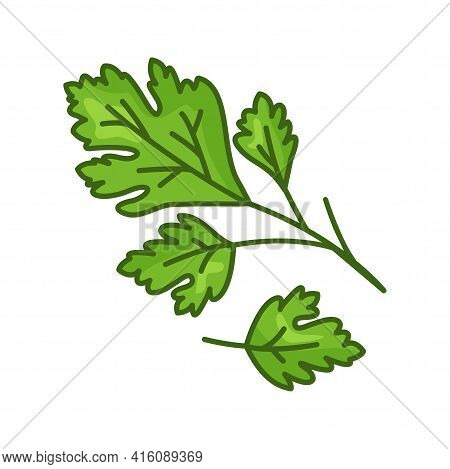 Parsley Vector Icon, Green Leaves, Cartoon Fresh Plant Isolated On White Background. Herb Illustrati