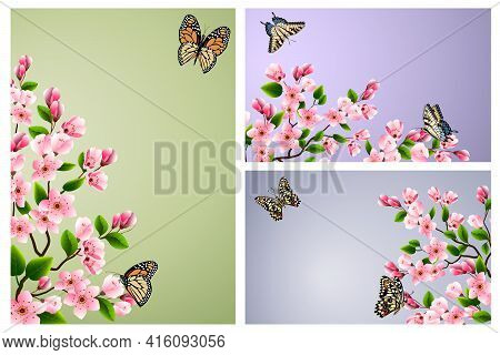 Set Of Illustrations With Cherry Blossoms.branches Of Blossoming Cherry And Butterflies On A Colored