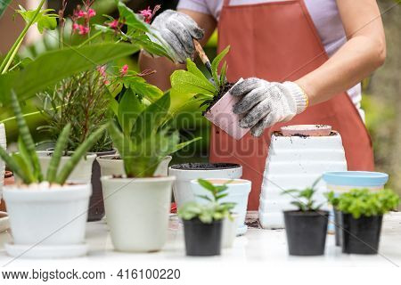 Close Up Hands  Woman Care  Plant Flower In Garden. People Hobby And Freelance Gardening Indoor At H