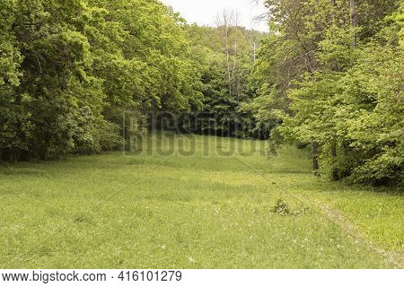 Beautiful Meadow With Meadow Grass. The Meadow Is In The Middle Of The Forest And There Are Green Tr