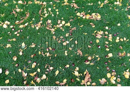 Texture Of Green Lawn With Fallen Leaves And Conkers In October