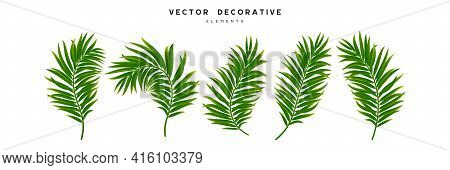 Set Of Palm Leaves Isolated On White Background. Exotic Tropical Leaves For Summer Jungle Design. Ve
