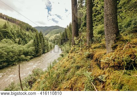 A Close Up Of A Hillside Next To A Forest