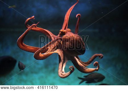 Octopus On The Bottom Of The Sea, Blue And Black Background.