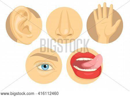 Cartoon Set Of Human Sense Organs Flat Vector Illustration. Five Senses Of Touch, Sight, Smell, Tast