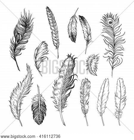 Different Feathers Of Birds Engraved Illustrations Set. Hand Drawn Vintage Ink Sketch Of Bird Quills