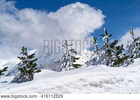 Panoramic View The Caucasus Mountains And Pines On Foreground Of The Ski Resort Krasnaya Polyana, So