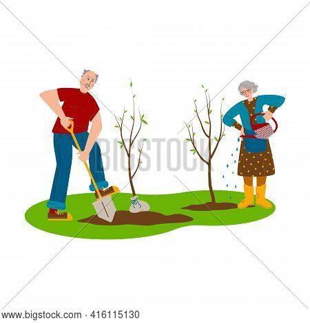 Elderly Couple Working In The Garden. Seniors Plant Young Trees. A Man Is Digging The Ground, A Woma