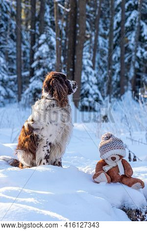 Close-up Of Dog With Stuffed Teddy Bear. Nature Winter Landscape On Background. English Springer Spa