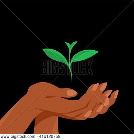 The Female Hand Carefully Holds The Green Sprout Of The Plant. Vector Illustration On Black Backgrou