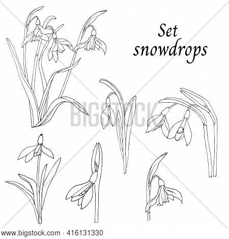 Black And White Set Of Snowdrops, An Outline Drawing Is Cut Out On A White Background. Vector Drawin