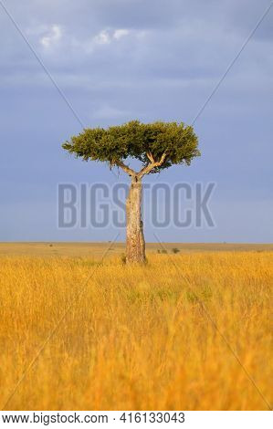 Lonely Tree In An African Savanna Over Blue Sky