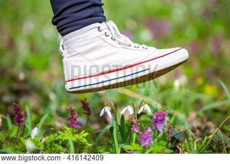 The Foot Of A Woman Shoes Steps On A Rare Flowers In National Park, Botanical Garden, Damage To Natu