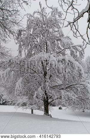 A Snow-covered Tree In A Snow-covered Park In Cloudy Weather..