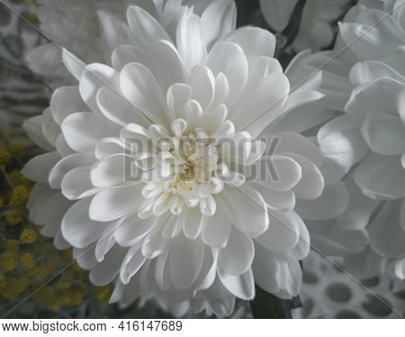 Beautiful Chrysanthemum In A Bouquet Among Other Flowers. Presented Close-up.